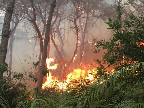 Cháy rừng phòng hộ hơn 8 giờ, vẫn chưa dập được - Ảnh 1.