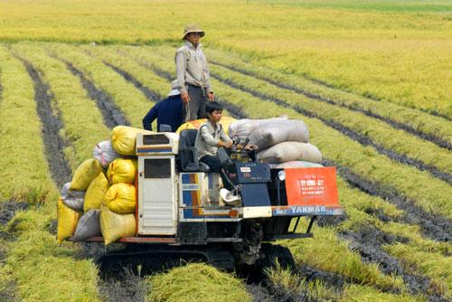Lấy doanh nghiệp làm đầu tàu nông nghiệp - Ảnh 1.