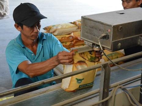 Nhiều nước đang có nhu cầu nhập khẩu gạo chất lượng cao. Trong ảnh: Đóng gạo vào bao để xuất khẩu tại một công ty. Ảnh: QH