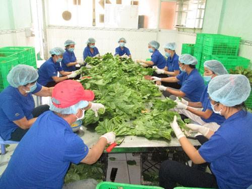 TP HCM tăng cường kiểm soát thực phẩm theo chuỗi - Ảnh 1.