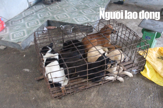 Bắt 2 cẩu tặc, tạm giữ hơn 50 con chó - Ảnh 4.