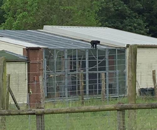 Hàng loạt du khách bị nhốt để vườn thú bắt con khỉ xổng chuồng - Ảnh 1.