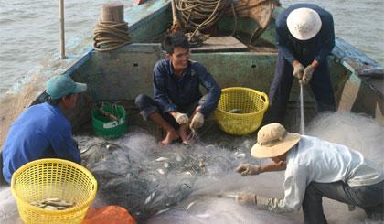 Xôn xao mùa cá đối ở Gò Công Đông - Ảnh 2.