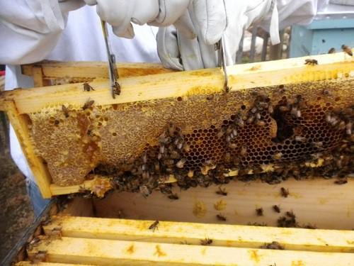 Hiểm hoạ khôn lường từ mật ong giả - Ảnh 2.