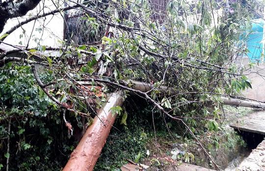 Lâm Đồng: 2 người chết, nhiều nơi bị cô lập do bão - Ảnh 5.