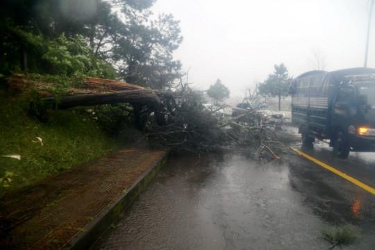 Lâm Đồng: 2 người chết, nhiều nơi bị cô lập do bão - Ảnh 6.