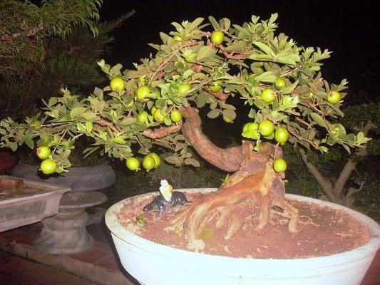 10 loại cây vừa cho ăn trái vừa làm đẹp sân vườn - Ảnh 9.
