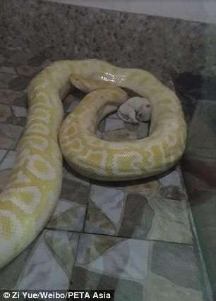Sở thú Trung Quốc bị lên án vì cho trăn ăn chó con - Ảnh 3.