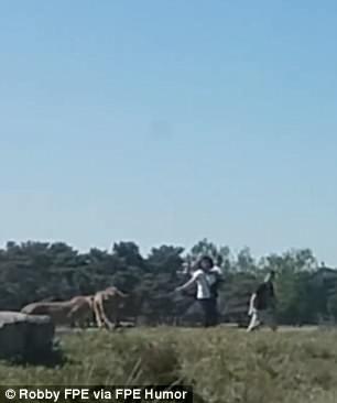 Ra khỏi xe chụp ảnh, cả gia đình bị báo đốm đuổi suýt chết - Ảnh 4.