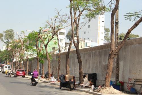 Công trình hạ tầng hại chết cây xanh - Ảnh 1.