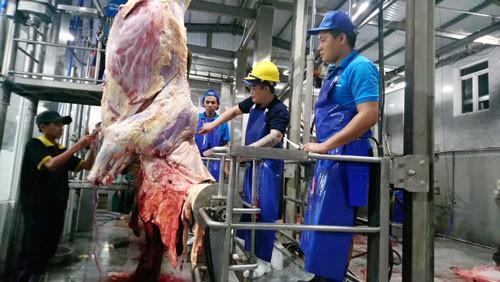 Bò Úc hết thời nuôi sao cũng lãi - Ảnh 1.