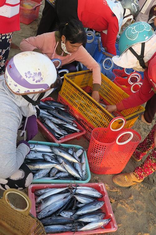Sướng mắt với chợ cá tươi roi rói vào buổi sớm mai ở Bãi Phủ - Ảnh 4.