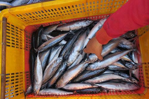 Sướng mắt với chợ cá tươi roi rói vào buổi sớm mai ở Bãi Phủ - Ảnh 5.