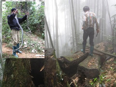 Rùng rợn chuyện lao vào rừng sâu săn rắn ở Lào Cai - Ảnh 1.