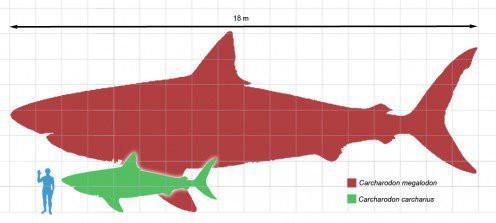 Dấu vết cá mập quái thú 2,5 triệu tuổi xuất hiện… giữa thành phố - Ảnh 2.