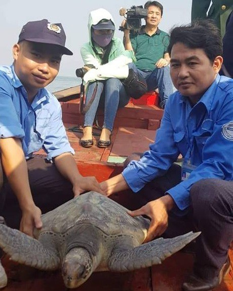 Rùa biển quý hiếm nặng 25 kg mắc lưới ngư dân - Ảnh 1.