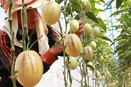 Đưa nông sản sạch Đà Lạt ra thế giới - Ảnh 1.