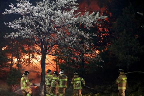 Hàn Quốc đối mặt thảm họa cháy rừng - Ảnh 1.