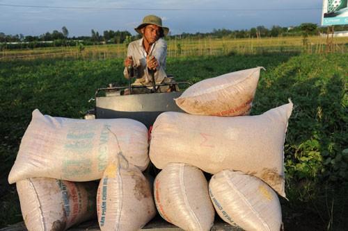 Nghẽn đường xuất khẩu gạo sang Trung Quốc - Ảnh 1.