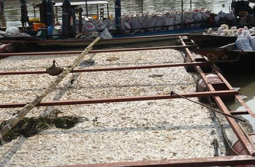 Thảm kịch trên sông La Ngà - Ảnh 1.