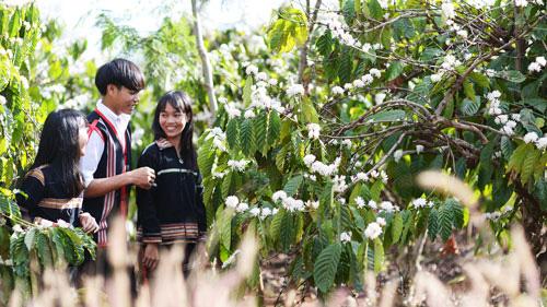 Hoa tuyết nhuộm trắng núi đồi - Ảnh 1.