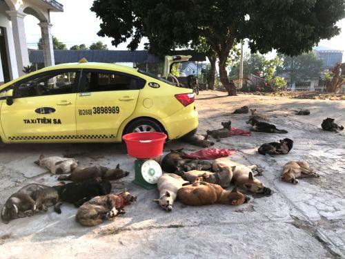 Nhóm trộm dùng taxi chở 22 con chó đi tiêu thụ thì bị bắt - Ảnh 1.