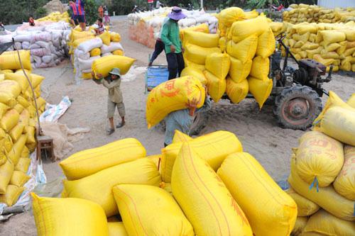 Hải quan mở tờ khai xuất khẩu gạo lúc nửa đêm, Phó Thủ tướng yêu cầu 2 Bộ báo cáo - Ảnh 1.