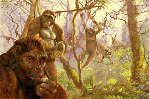 Sốc: loài 4,4 triệu tuổi biến đổi nhảy vọt từ tinh tinh thành con người - Ảnh 1.
