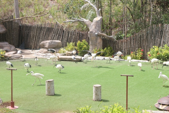 Mãn nhãn với màn biễu diễn thú ở Safari Phú Quốc - Ảnh 1.