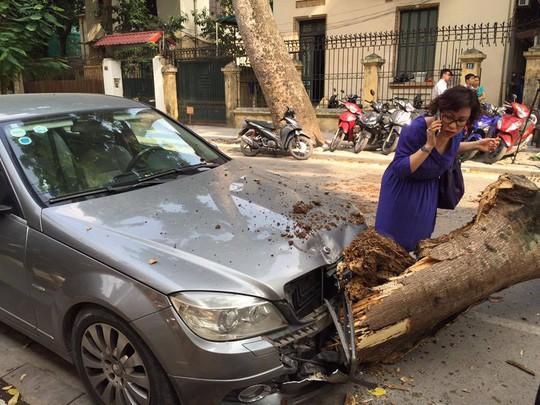 Trời nắng gió nhẹ, cây cổ thụ đổ đè lên xe Mercedes giữa phố - Ảnh 1.