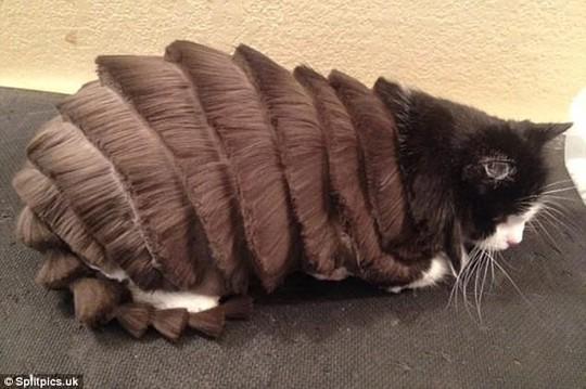 Những chú mèo có bộ lông độc đáo ai cũng phải bật cười - Ảnh 1.
