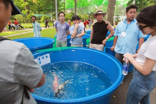 Tưng bừng hội thi cá Koi tại Thảo Cầm Viên - Ảnh 10.