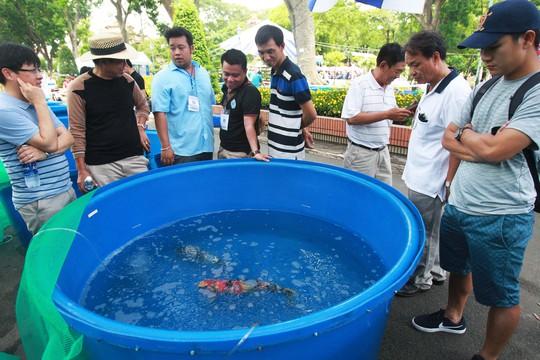Tưng bừng hội thi cá Koi tại Thảo Cầm Viên - Ảnh 9.