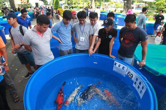 Tưng bừng hội thi cá Koi tại Thảo Cầm Viên - Ảnh 2.
