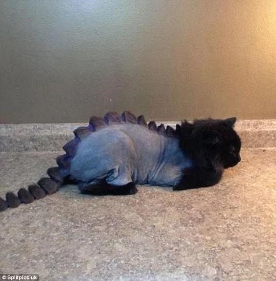Những chú mèo có bộ lông độc đáo ai cũng phải bật cười - Ảnh 11.