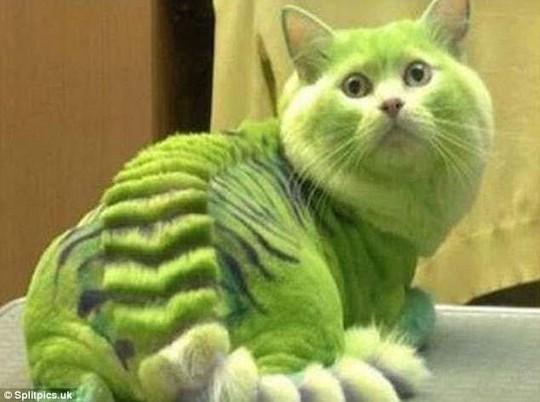 Những chú mèo có bộ lông độc đáo ai cũng phải bật cười - Ảnh 17.