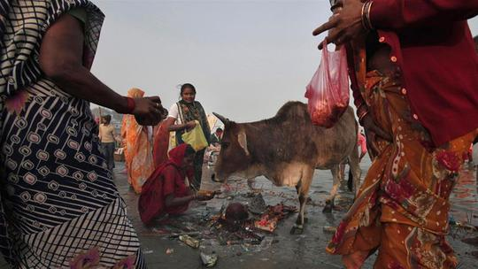 Ấn Độ: Bị đánh chết vì chở bò - ảnh 2