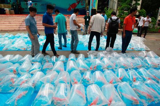 Tưng bừng hội thi cá Koi tại Thảo Cầm Viên - Ảnh 4.