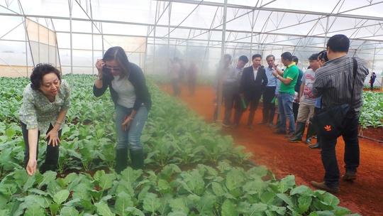 Cần chấm dứt tình trạng đội lốt sản phẩm nông nghiệp tỉnh Lâm Đồng - Ảnh 1.