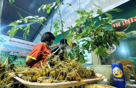 Bán được củ sâm giá 120 triệu đồng tại lễ hội sâm Ngọc Linh - Ảnh 3.