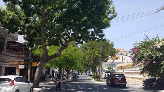 TP Nha Trang đào hàng loạt cây xanh mở rộng đường - Ảnh 3.