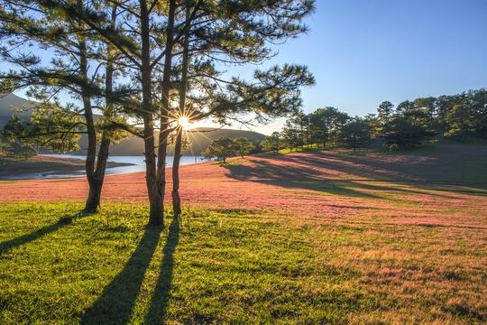 Ngây ngất với Thảo nguyên - cỏ hồng Đà Lạt dịp lễ 2-9 - Ảnh 1.