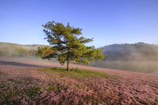 Ngây ngất với Thảo nguyên - cỏ hồng Đà Lạt dịp lễ 2-9 - Ảnh 2.
