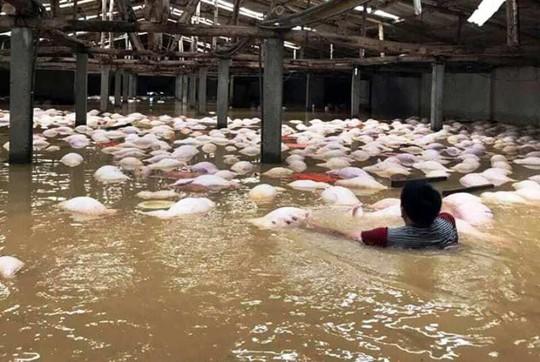 Inundaciones en Vietnam dejan al menos 37 muertos y 40 desaparecidos