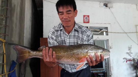 Câu được cá lạ lấp lánh ánh vàng, nghi cá sủ vàng quý hiếm - Ảnh 1.