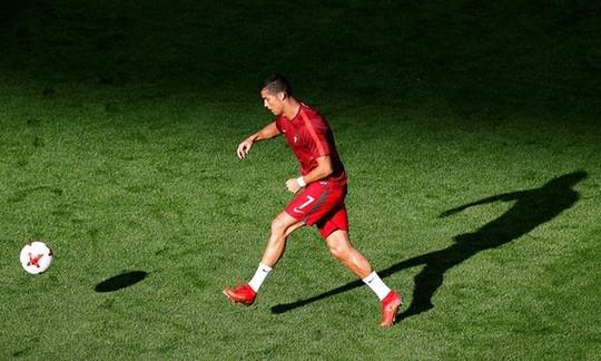 Gấu tiên tri báo điềm xấu cho Ronaldo và đồng đội - Ảnh 2.