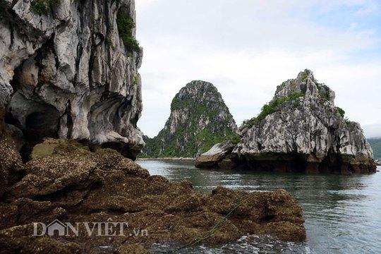 Tận mắt thấy cao thủ săn con cù kỳ nức tiếng ở vịnh Bái Tử Long - Ảnh 4.