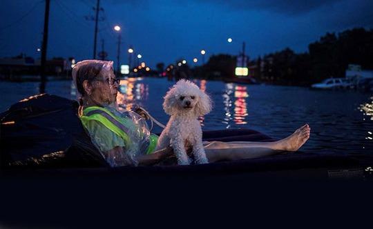 """Mỹ: """"Đảo kiến lửa"""" xuất hiện trong bão Harvey - Ảnh 6."""