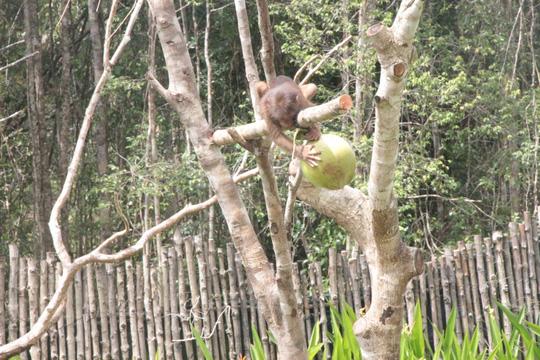 Mãn nhãn với màn biễu diễn thú ở Safari Phú Quốc - Ảnh 4.