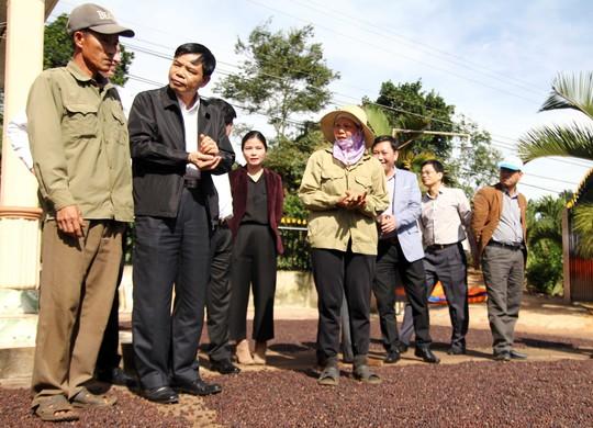 Cà phê Việt yếu từ tổ chức sản xuất đến chế biến - Ảnh 5.